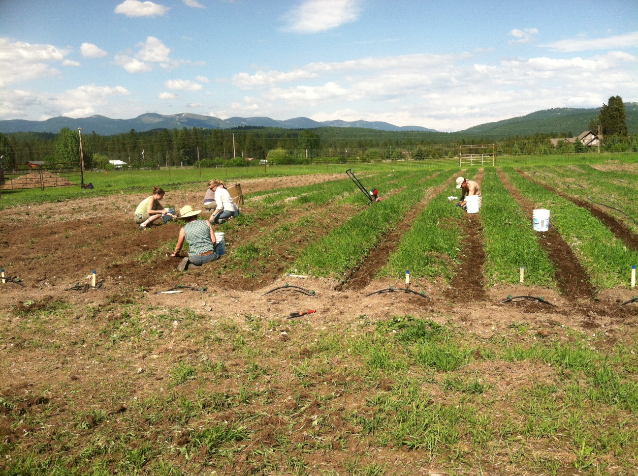 Fir Avenue Whitefish Mt  Farmerthewickedgoodfarm Com